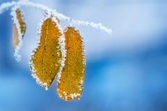 De winterscène stock fotografie
