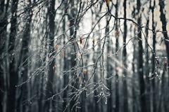 De winterscène Stock Afbeeldingen