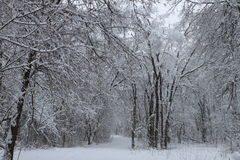 De winterscène 1 Royalty-vrije Stock Fotografie