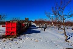 De winterscène in appelboomgaard in Hudson Valley-NY Royalty-vrije Stock Foto