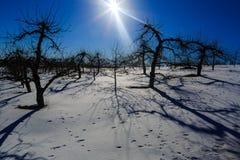 De winterscène in appelboomgaard in Hudson Valley-NY Royalty-vrije Stock Afbeelding