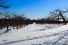 De winterscène in appelboomgaard in Hudson Valley-NY Stock Afbeelding