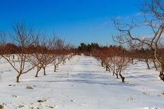 De winterscène in appelboomgaard in Hudson Valley-NY Stock Fotografie