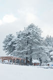De winterscène, huis en gazebo onder de grote pijnboomboom in sneeuw Royalty-vrije Stock Foto