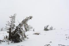 De winterscène met bevroren bomen stock afbeelding