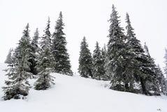 De winterscène met bevroren bomen stock foto