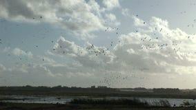 De winterscène met ganzen in de lucht Engeland stock video