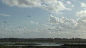 De winterscène met ganzen in de lucht Engeland stock videobeelden