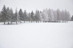 De winterscène met Sneeuw Behandelde Bomen Royalty-vrije Stock Foto's