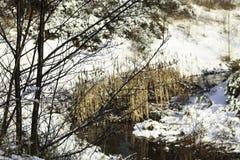 De winterscène van een stroom Royalty-vrije Stock Foto's