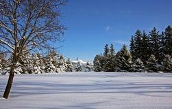De winterscène van het land Stock Afbeeldingen