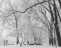 De winterscène van mens het lopen hond in het park Royalty-vrije Stock Afbeelding