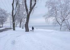 De winterscène van mens het lopen hond in het park door een meer Royalty-vrije Stock Afbeeldingen
