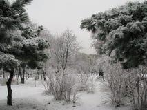 De winterscène van park met sneeuw wordt behandeld die stock fotografie