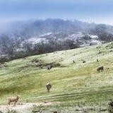 De winterschapen Royalty-vrije Stock Foto
