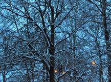 De winterschemering Stock Foto