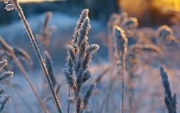 De winterscène Royalty-vrije Stock Foto