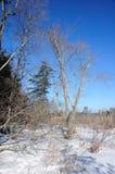 De winterscène in New England Stock Foto's
