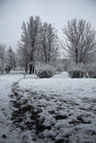 De wintersleep Stock Fotografie