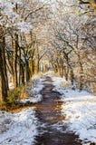 De wintersleep die tussen de bevroren bomen lopen Magische stralen van de zondaling op de takken van bomen stock fotografie