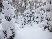 De wintersneeuw stock fotografie