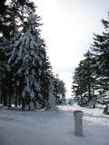 De wintersneeuw behandelde bomen in een bos Stock Afbeeldingen