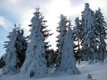 De wintersneeuw behandelde bomen in het bos Stock Afbeeldingen