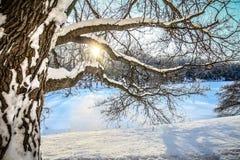 De wintersneeuw behandelde Ochtend Stock Fotografie