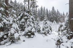 De wintersneeuw behandelde sparren op berghellings blauwe hemel Royalty-vrije Stock Afbeeldingen