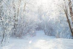 De wintersneeuw bij gebied Stock Fotografie