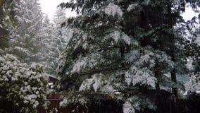 De wintersneeuw die neer op groene foretbomen vallen in december stock videobeelden