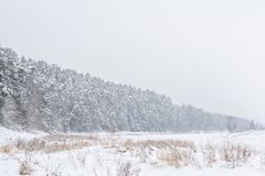 De wintersneeuw en mistig landschap royalty-vrije stock foto
