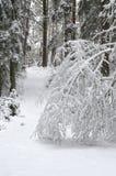 De wintersneeuw in het hout Stock Foto