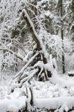 De wintersneeuw in het hout Stock Afbeeldingen