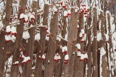 De wintersneeuw het meer berrier hangen op een oude houten omheining Stock Afbeeldingen