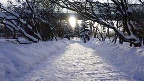 De wintersneeuw in het park van Gorky stock foto