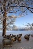 De wintersneeuw - North Yorkshire - het Verenigd Koninkrijk Stock Foto