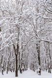 De wintersneeuw op Forest Trees Stock Fotografie