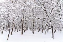 De wintersneeuw op Forest Trees Royalty-vrije Stock Foto
