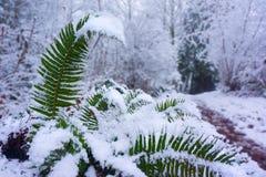 De wintersneeuw op Varens Forest Path stock fotografie