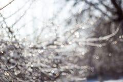 de de wintersneeuw vertroebelde achtergrond in stadspark, sneeuwval in bos, boomtakken en struiken met sneeuw worden behandeld di royalty-vrije stock foto's