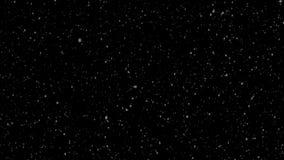 De wintersneeuwval Eenvormige val van zachte sneeuw op een zwarte achtergrond looped