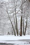De wintersprookje in een sneeuwbos Royalty-vrije Stock Fotografie