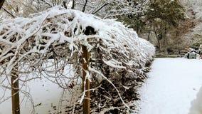 De wintersprookjesland Royalty-vrije Stock Fotografie