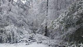 De wintersprookjesland Stock Afbeeldingen
