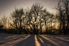 De wintersprookjesland Royalty-vrije Stock Foto