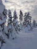 De wintersprookjesland bewolkte hemel met aardige die bomen met sneeuw worden behandeld stock afbeeldingen