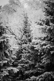 De wintersprookjesland - de Winterbos Stock Afbeeldingen