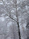 De wintersprookjesland, onze tuin in Servië, Fruska Gora royalty-vrije stock afbeeldingen
