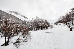 De wintersprookjesland, Sneeuwsleep Stock Afbeelding